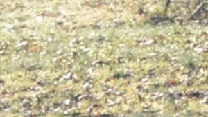 vlcsnap-2018-09-06-07h41m13s131